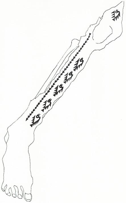 Tatuajes Con Motivos Incas tatuajes prehispánicos - arqueología del perú | historia, turismo