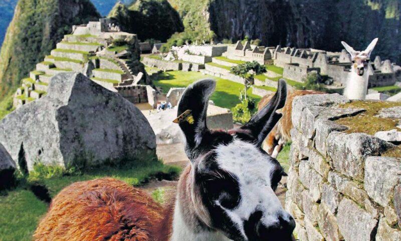 El Camino Inca, destino Machu Picchu: Por la calzada, entre nieblas y colibríes