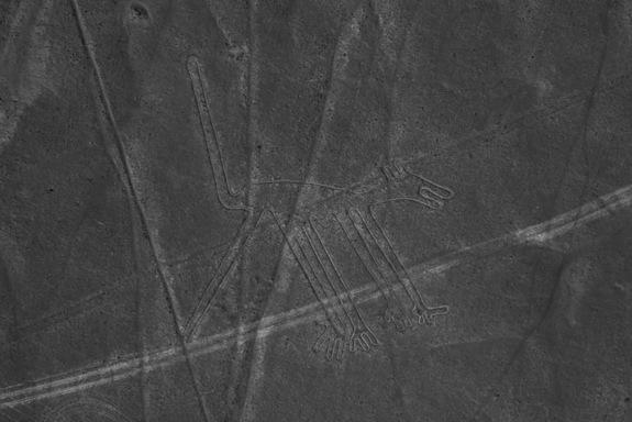 dog nazca lines image