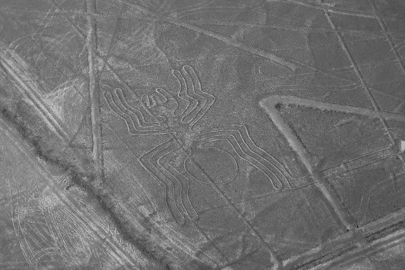 nazca lines the spider