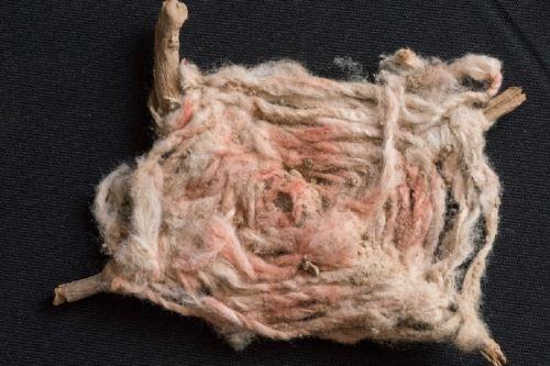 Hallan ofrendas de élite de significado ritual y ceremonial en Áspero, Caral
